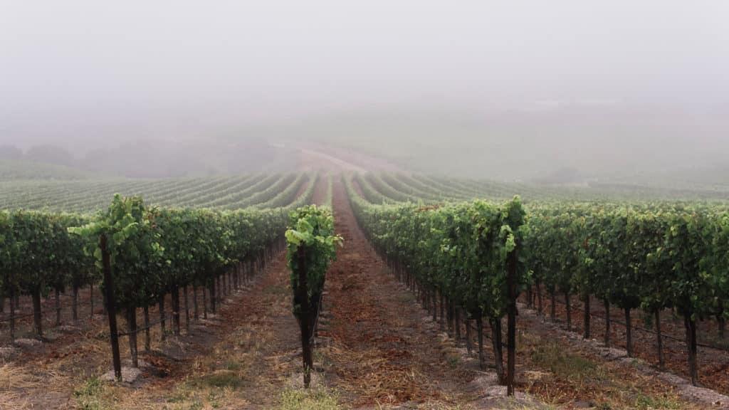 Rancho La Vina Vineyards